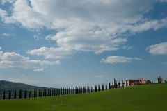 Conifer trees across Tuscan landscape. Royalty Free Stock Images