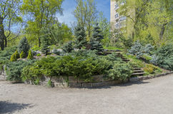 Conifer trees in a botanical garden. Royalty Free Stock Photography