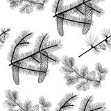 Conifer trees branches seamless pattern,  black drawing, transparent background. Royalty Free Stock Photos
