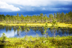 Conifer trees by lake Royalty Free Stock Photos