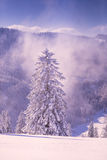 Conifer trees in winter in Black Forest, Germany Royalty Free Stock Images