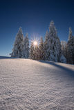 Conifer trees in winter in Black Forest, Germany Stock Images