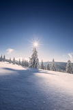 Conifer trees in winter in Black Forest, Germany Stock Image