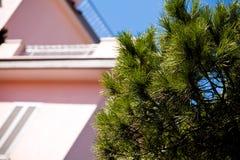 Conifera dalla casa al giorno pieno di sole Immagini Stock Libere da Diritti