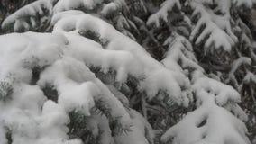 Conifera e forte nevicata stock footage