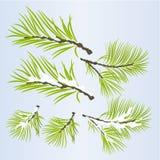 Conifera fertile dei rami di pino autunnale ed illustrazione nevosa di vettore dello sfondo naturale di inverno editabile illustrazione vettoriale