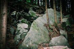 Conifere che crescono dai massi nelle montagne fotografie stock