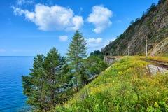 Conifere sulla riva del lago vicino alla ferrovia di Circum-Baikal fotografie stock