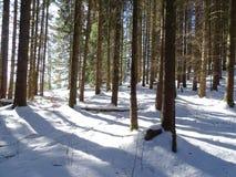 Coniferous лес в Jachenau Стоковые Фото