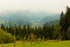 Coniferous лес зеленый цвет, деревья высокорослые и горы Стоковые Изображения RF