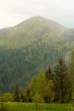 Coniferous лес зеленый цвет, деревья высокорослые и горы Стоковые Изображения