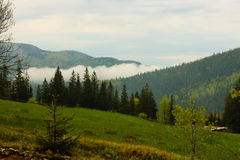 Coniferous лес зеленый цвет, деревья высокорослые и горы Стоковые Фото