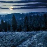 Coniferous лес на верхней части горы на ноче Стоковые Фотографии RF