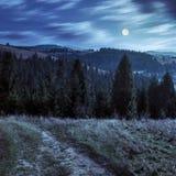 Coniferous лес на верхней части горы на ноче Стоковые Изображения