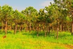 Coniferous лес Стоковые Фотографии RF