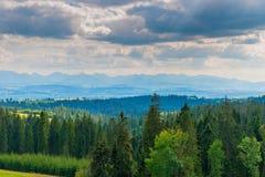 Coniferous лес, взгляд гор Tatra гор на Стоковое Изображение