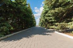 Coniferous переулок Стоковые Изображения