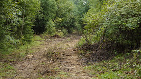 coniferous древесина Украины путя пущи восточной европы Стоковые Фото