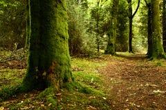 coniferous древесина Украины путя пущи восточной европы Стоковое фото RF