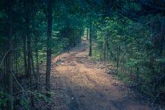 coniferous древесина Украины путя пущи восточной европы Стоковые Изображения