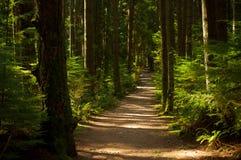 coniferous древесина Украины путя пущи восточной европы Стоковое Изображение RF