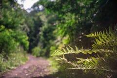 coniferous древесина Украины путя пущи восточной европы Стоковая Фотография RF
