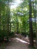 coniferous древесина Украины путя пущи восточной европы Стоковые Изображения RF