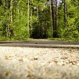 coniferous древесина Украины путя пущи восточной европы Стоковое Фото