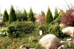 coniferous сад Стоковое Изображение