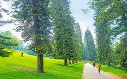 The coniferous alley in Peradeniya garden Stock Image