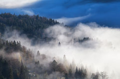 Coniferous alpine forest in dense morning fog Stock Images