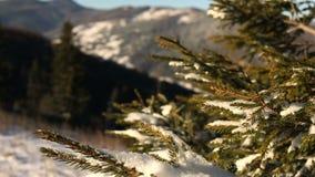 Coniferous branch under snow with sun light. Shot of coniferous branch under snow with sun light stock video