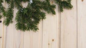 Coniferous branch on wood Stock Photos