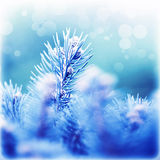 Coniferous branches covered rime Royalty Free Stock Photography