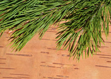 Coniferous branches and wood background Royalty Free Stock Images
