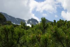 Coniferous bushes on the background of a cloudy sky with a blue gleam. Mountains view through the pine needles, background stock photography