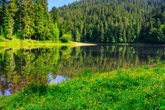 Coniferous coast of river in  mountains horisontal Stock Images