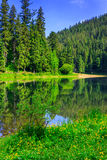 Coniferous coast of river in  mountains vertical. Coniferous coast of clear river in mountains on a summer morning vertical Stock Photos