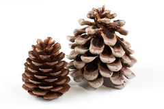 Coniferous cones. Fur-tree and cedar cones on a white background Royalty Free Stock Photos