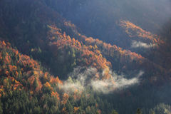 Coniferous and deciduous mountain forest in autumn colors Royalty Free Stock Images