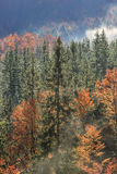 Coniferous and deciduous mountain forest in autumn colors Stock Images