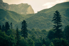 Coniferous deep Forest in Mountains Caucasus Stock Images