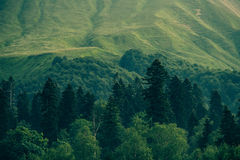 Coniferous deep Forest in Mountains Caucasus Stock Photo