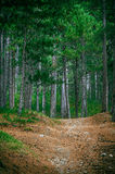 Coniferous deep Forest and road Stock Image
