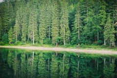 Coniferous Fir Forest and lake mirror reflection wild woods landscape. Moody weather Royalty Free Stock Image