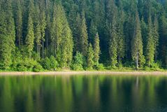 Coniferous Fir Forest and lake mirror reflection wild woods landscape moody weather. Coniferous Fir Forest and lake mirror reflection wild woods landscape Travel Stock Image