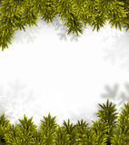 Coniferous fir frame. Stock Photo