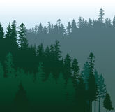 Coniferous forest vector illustration
