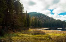 Coniferous forest around the lake. Beautiful landscape in mountains on a cloudy autumn day royalty free stock image