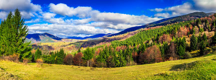 Coniferous forest in autumn mountains royalty free stock image